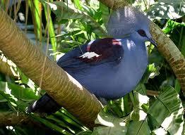bali-bird-park-burung-dara