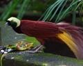 bali-bird-park-04