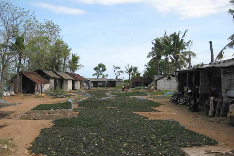 wisata-desa