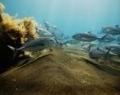 bali-hai-cruise-3-island-ocean-rafting-marine-life