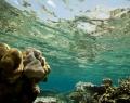 under-water-view