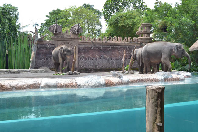 bali-safari-and-marine-park-4
