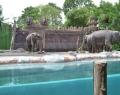 bali-safari-and-marine-park-4