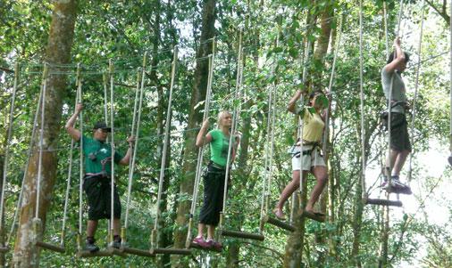 bali-tree-top-05