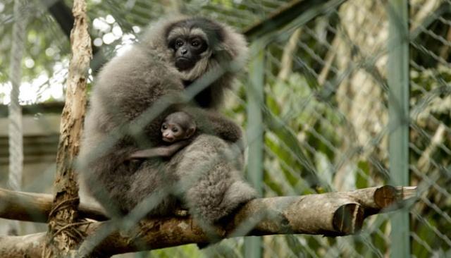 bali-zoo-park-monyet