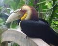 bali-zoo-park-1
