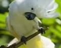 bali-bird-park-05