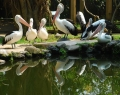bali-bird-park-3