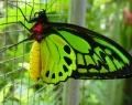 bali-butterfly-park-2