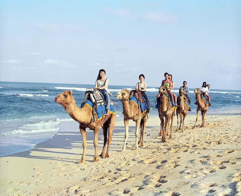 camel-safari-5