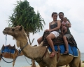 bali-camel-safari-3_0
