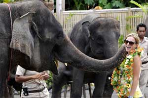 bali-safari_-elephant-show