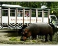 bali-safari-2