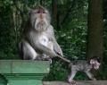 monkey-forest-5