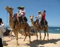 camel-safari-action.jpg