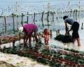 seaweed-parmer