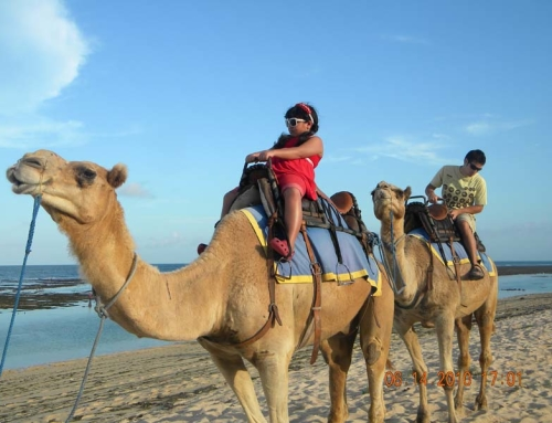 Camel Safari di Bali