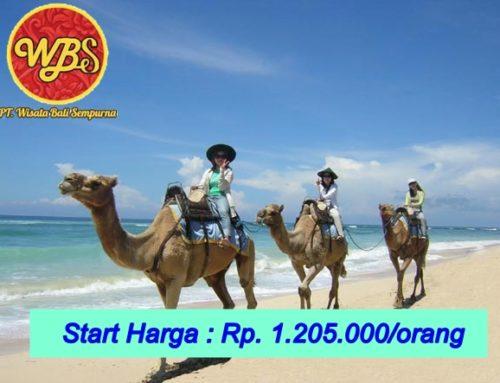 Paket Wisata di Bali 3 Hari 2 Malam : Edisi Spesial Naik Unta