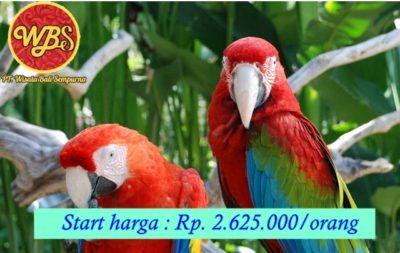 Bali Bird park 1