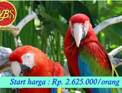 Paket Wisata di Bali 5 Hari 4 Malam : Edisi Liburan