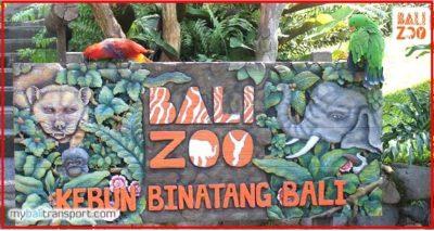 kegiatan-di-bali-zoo