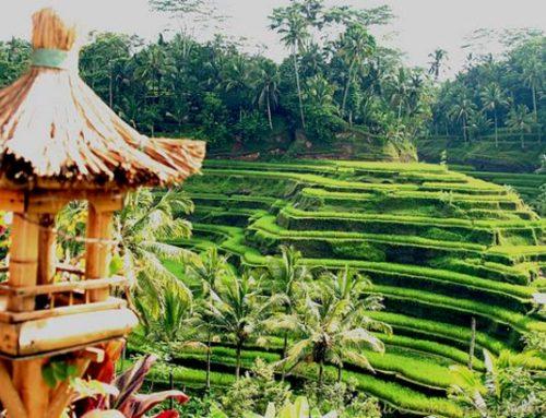 indahnya panorama Desa Ubud yang indah dan asri