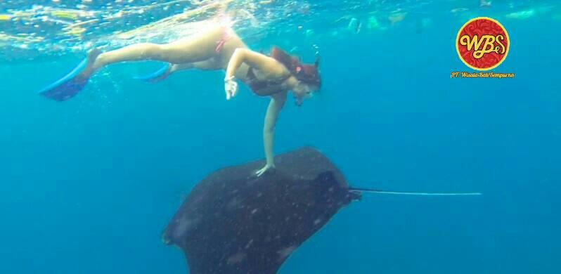 paket_tour_nusa_penida_snorkeling